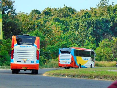 Harga Tiket Bus Rosalia Indah Agen Dan Bus Pariwisata Maret